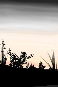 Early bird - Antoine Khanji