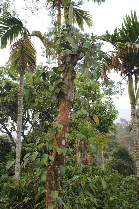 Green kerala - CAAWorks