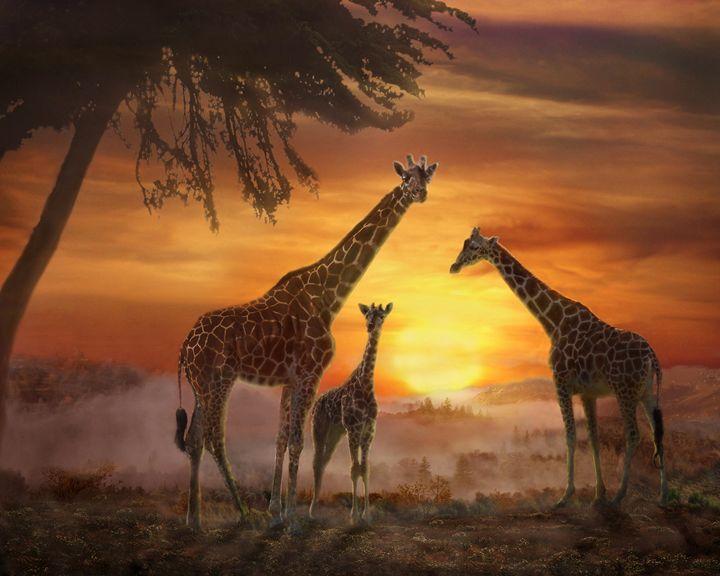Golden Sunset - WILD ART BY MELINDA