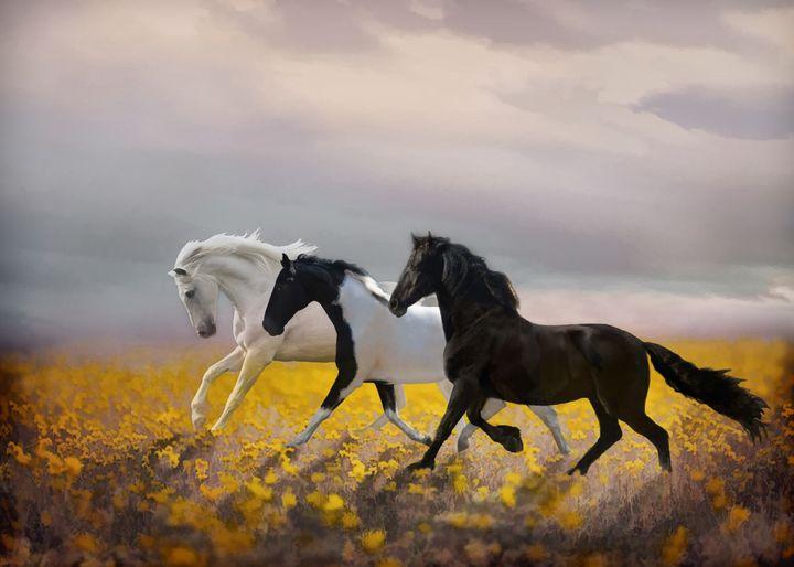 Logan's Run - WILD ART BY MELINDA