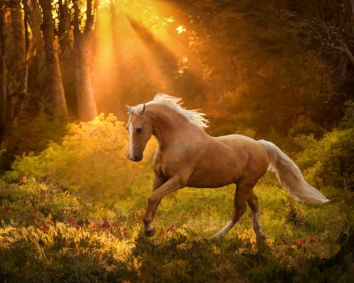 Golden Meadow - WILD ART BY MELINDA