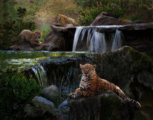 Jaguar Falls - WILD ART BY MELINDA