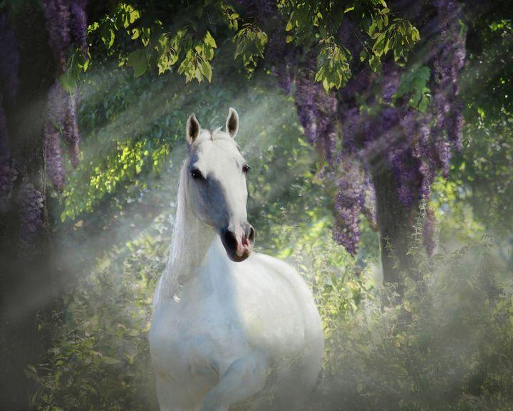 White Beauty - WILD ART BY MELINDA