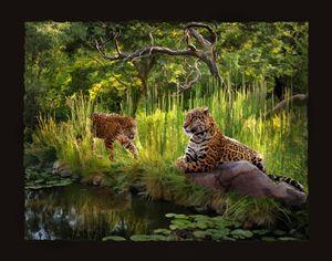 Jaguar Haven - WILD ART BY MELINDA