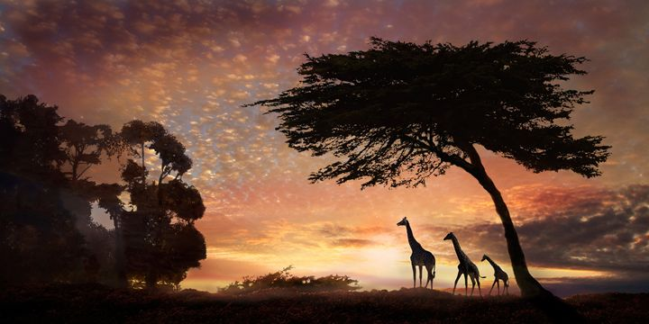 Safari Sunset - WILD ART BY MELINDA