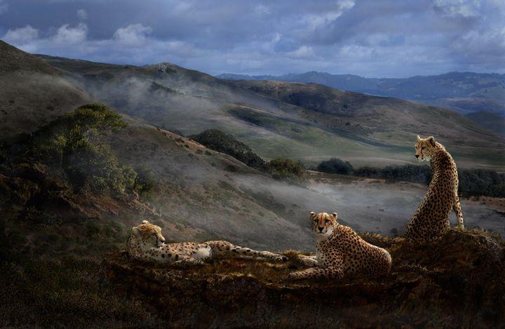 Cheetah Ridge - WILD ART BY MELINDA