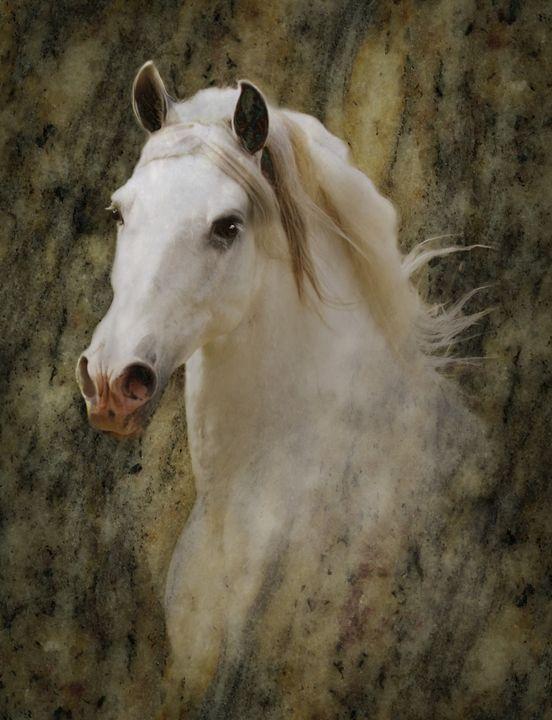 Jertez, a stallion - WILD ART BY MELINDA