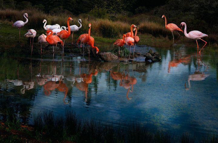 Flamingo Convention - WILD ART BY MELINDA