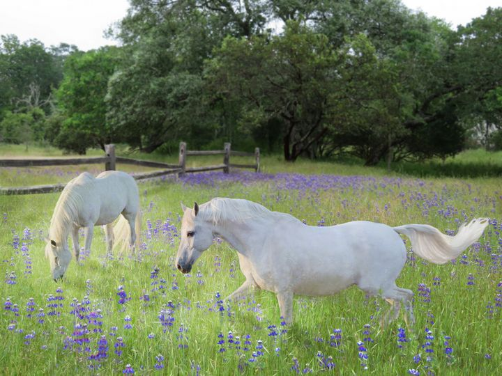 Lavender pastures - WILD ART BY MELINDA