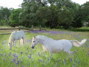 Lavender pastures
