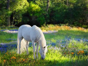 Heaven's Pasture