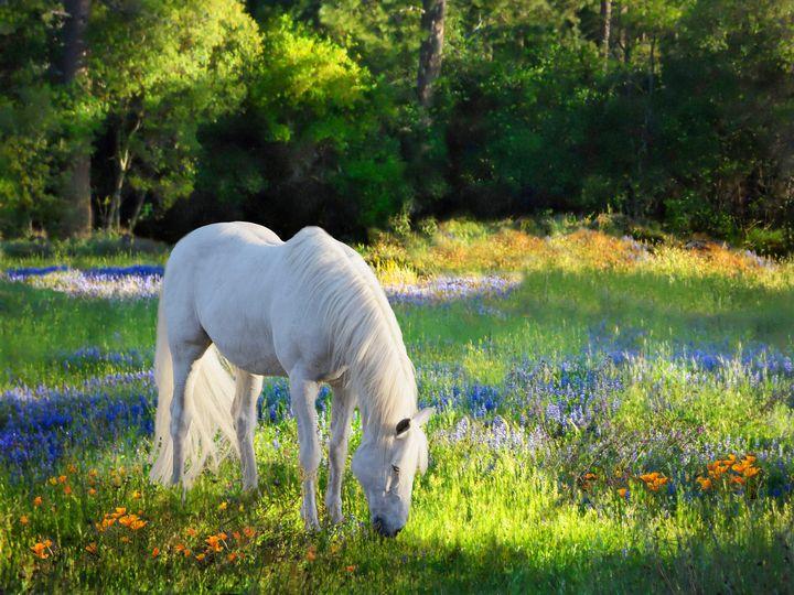 Heaven's Pasture - WILD ART BY MELINDA