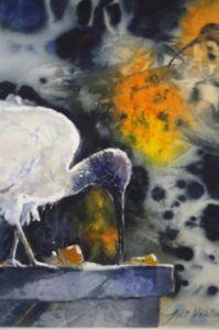 AUSTRALIAN WHITE IBIS - anki wickison art