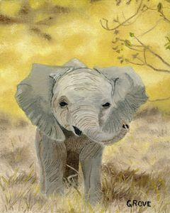 Early Morning Baby Elephant