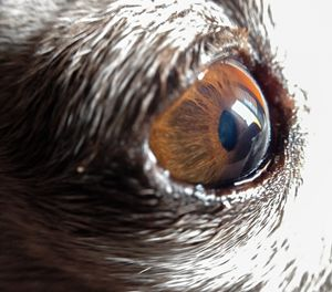 Dog eye - Original art.