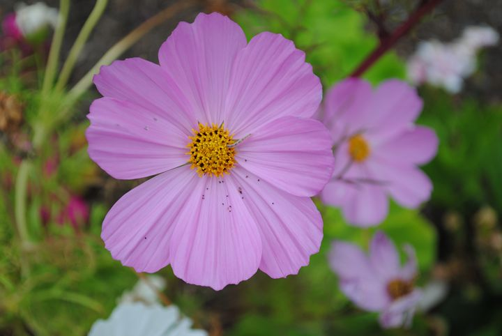 Pink Flower! - Steven's gallery