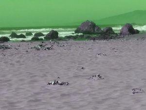 The green beach