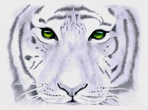 White Tiger -  Green Eyes.