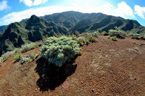 View on Bejia Tenerife