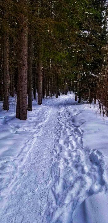 Winter Nature Trail - Kays Art & Photography