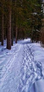 Winter Nature Trail