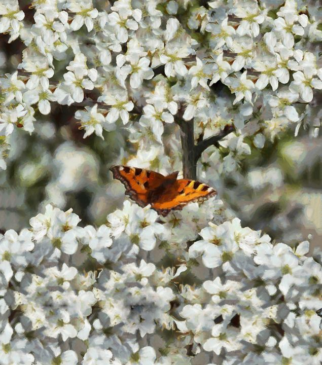 Butterfly on Blossom - Chris Bradbury Art