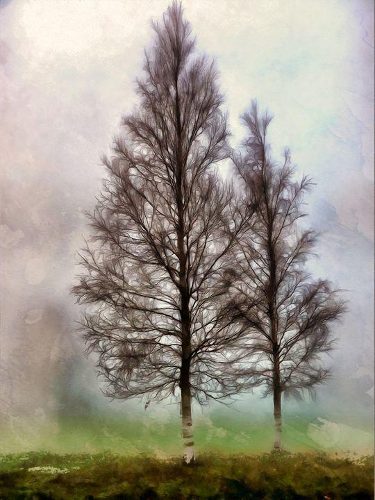 Silver Birches in Autumn - Chris Bradbury Art