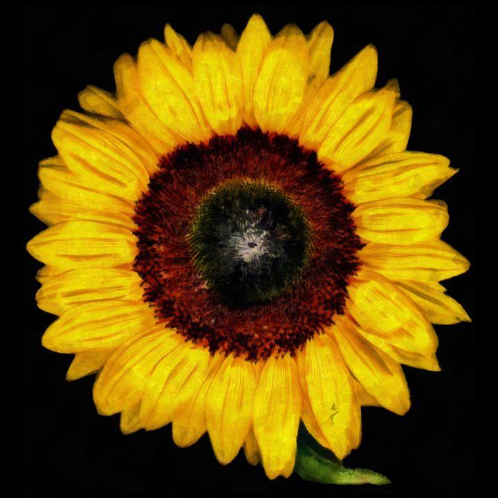 Sunflower - Chris Bradbury Art