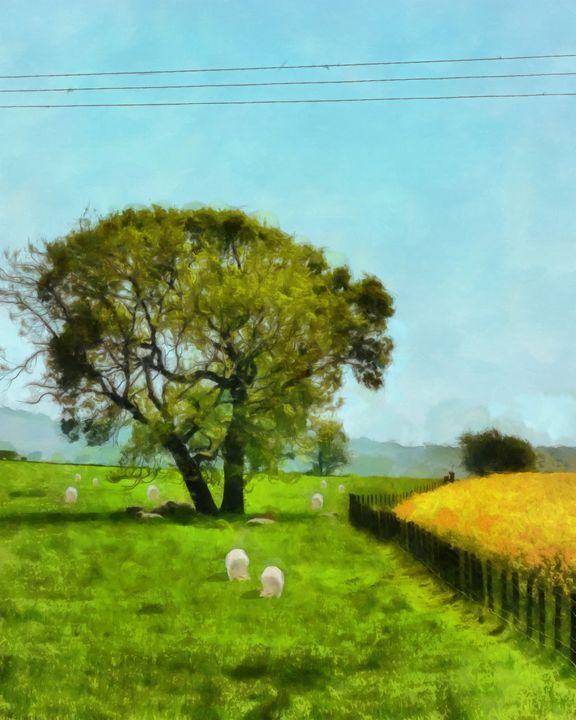 Sheep and Shade - Chris Bradbury Art