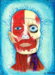 Anatomy Mindset