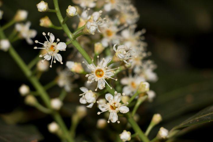 Flowers. - Gio Sakr