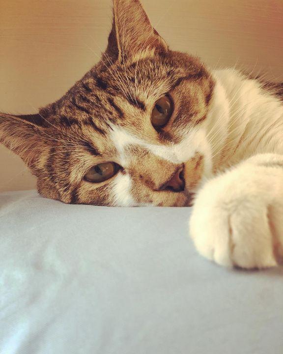 A cats glance - YoGirlToryn_UWU