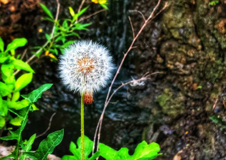 Make A Wish - Deborah Phillips