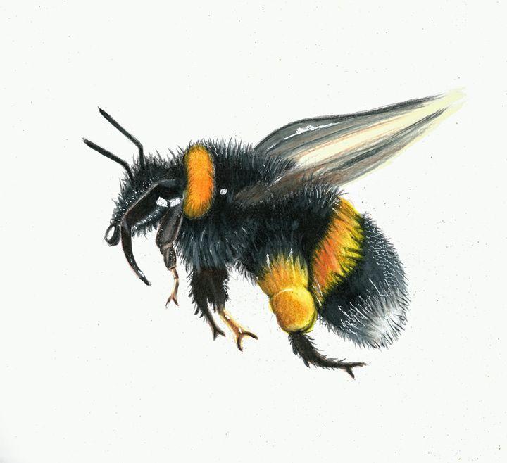 Bumblebee Drawing - Natasha Lovell Art