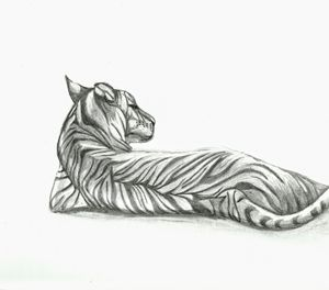 Content Tiger Drawing