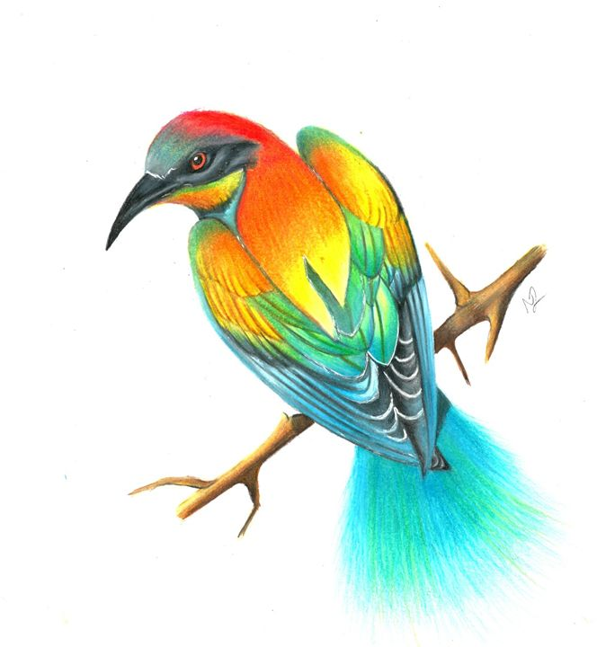 Bird Of Paradise Drawing - Natasha Lovell Art