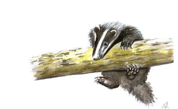 Badger Cub Watercolour Painting - Natasha Lovell Art