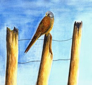Perched Kestrel painting