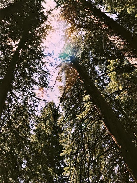 Through the Forest - Annie Jadlos