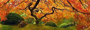 Tree of Zen by Peter Lik