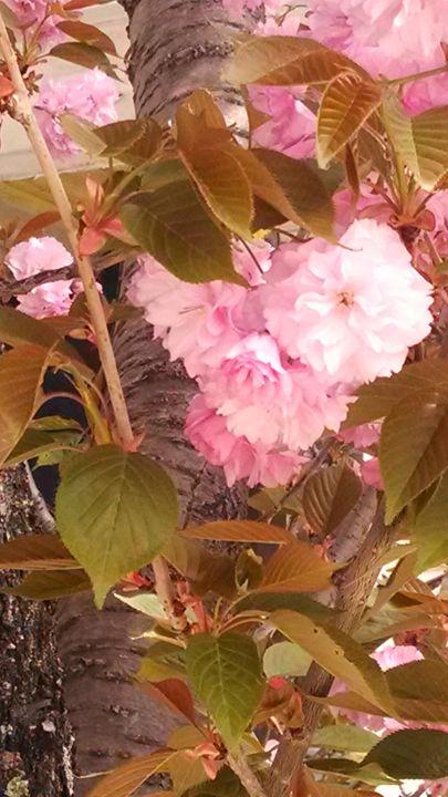 Blooming - Jessica Jones