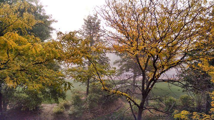 Autumn Fog - Jess Stark