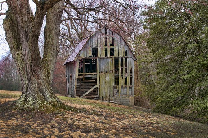 Old Maryland Barn - Lady Lea Photography