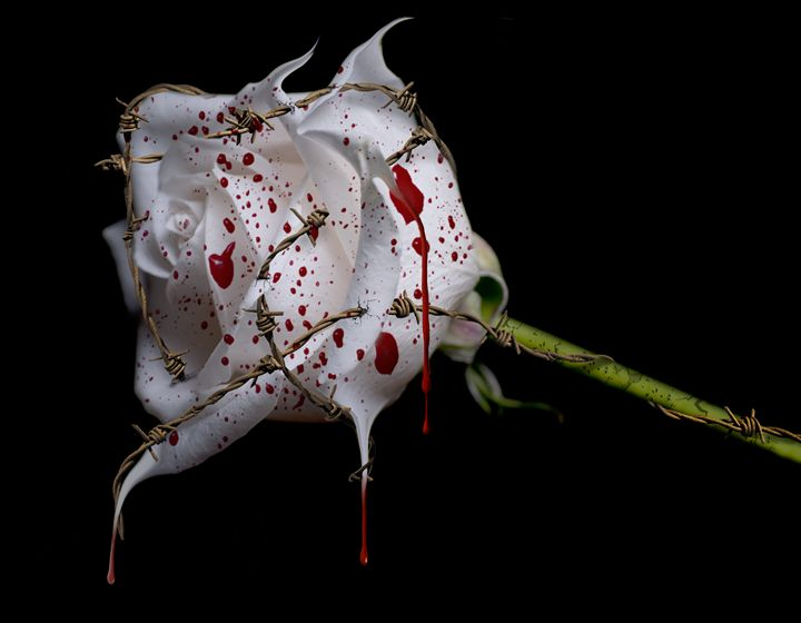 Bleeding Rose - Lady Lea Photography