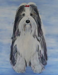 Mischa - Bearded Collie