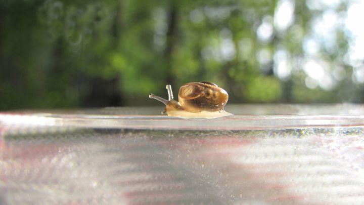 snail - dariusmorgendorfer