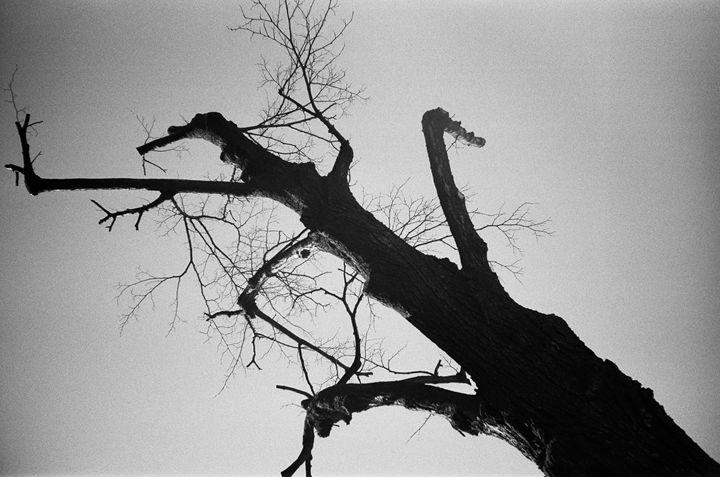 tree - dariusmorgendorfer