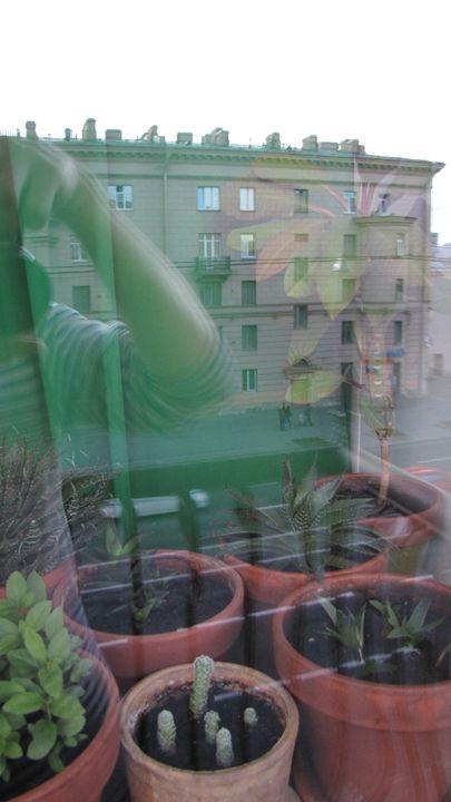 window - dariusmorgendorfer