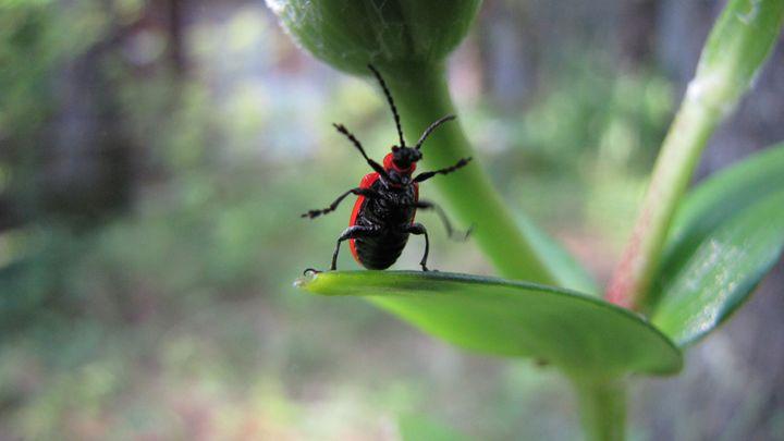 bug - dariusmorgendorfer