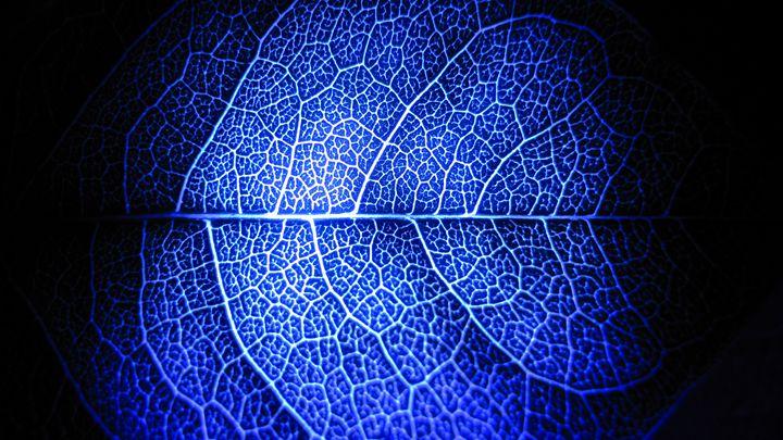 leaf - dariusmorgendorfer